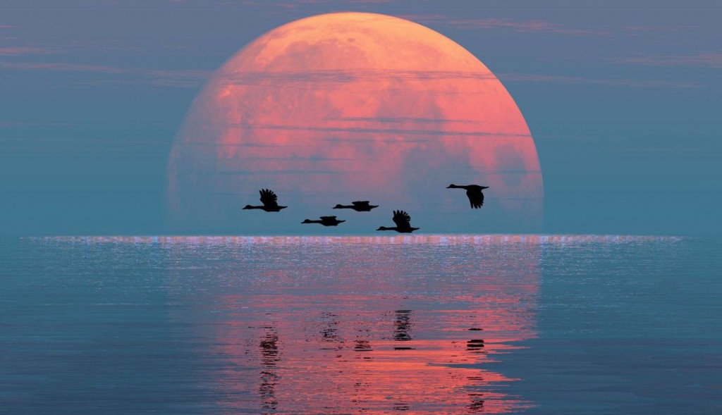 01 - full-moon-aquarius-geese